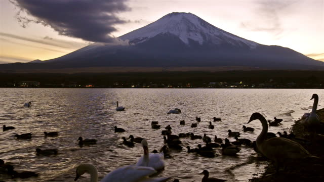 mt. fuji with swans and ducks at sunset - satoyama scenery stock videos & royalty-free footage