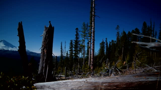 stockvideo's en b-roll-footage met mt. hood by moonlight stars at night full moon dead trees snags forest meadow recovery after wildfire - pacific crest trail