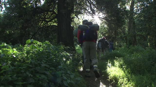 mt. kilimanjaro - regenwald stock-videos und b-roll-filmmaterial