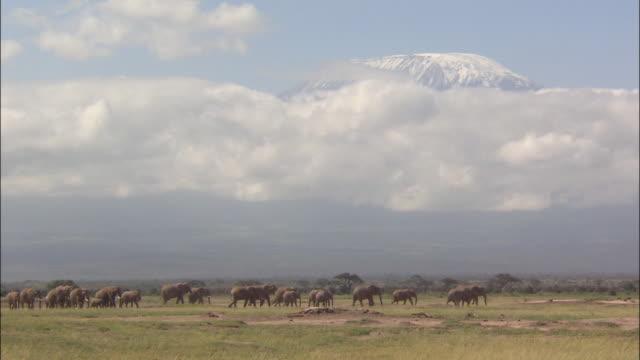vidéos et rushes de mt. kilimanjaro - géologie