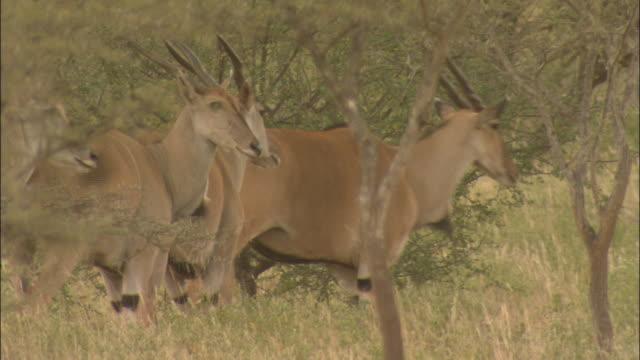 stockvideo's en b-roll-footage met mt. kilimanjaro - vier dieren