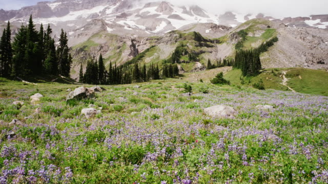 mt rainier climb, , travel and time-lapse through washington - wildflower stock videos & royalty-free footage