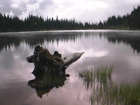 mt rainier - reflection lake #1 - mt rainier national park stock videos & royalty-free footage
