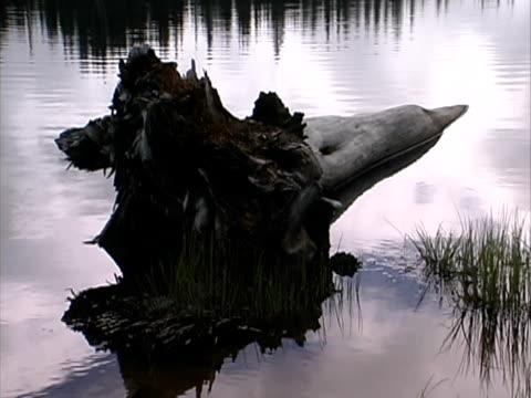 mt rainier - reflection lake #3 - mt rainier stock videos & royalty-free footage