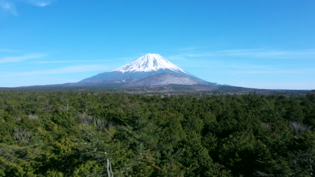 mt.fuji and aokigahara forest - mt fuji stock videos & royalty-free footage