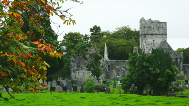 muckross abbey in killarney national park - tombstone stock videos and b-roll footage