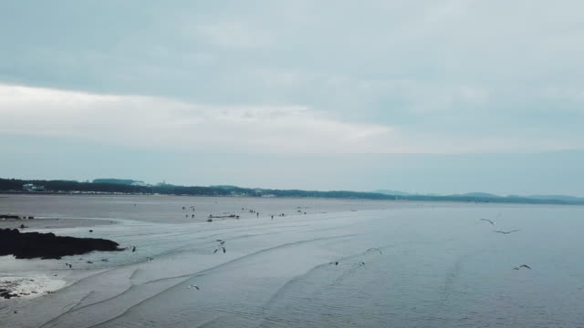 mud flats at mongsanpo beach / taean-gun, chungcheongnam-do, south korea - wide stock videos & royalty-free footage