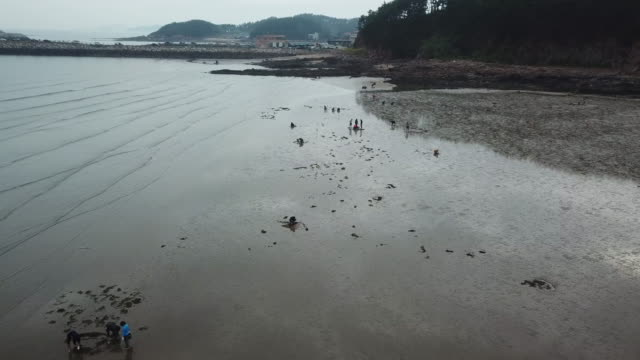 mud flats at mongsanpo beach / taean-gun, chungcheongnam-do, south korea - mud flat stock videos & royalty-free footage