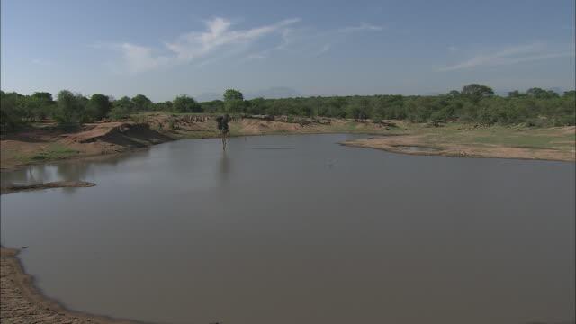 muddy banks flank a watering hole. - 水場点の映像素材/bロール