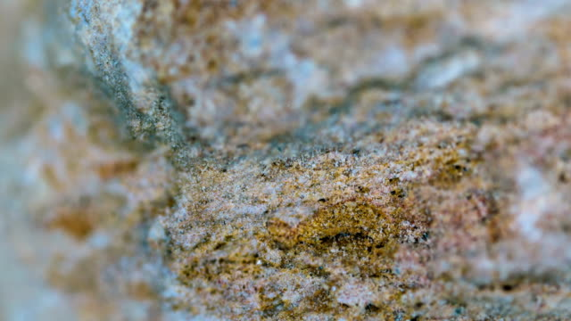 vídeos de stock, filmes e b-roll de amostra mineral do mudstone a microscopia clara - amostra científica