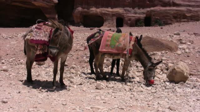 vídeos y material grabado en eventos de stock de mule en petra templo - burro