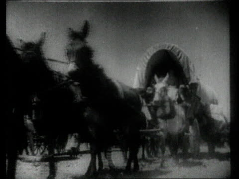 la mules pull pioneer wagon - medium group of animals stock videos & royalty-free footage
