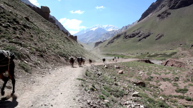mules running in aconcagua valley, argentina - mule stock videos & royalty-free footage