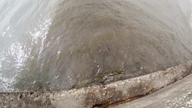 mullet fish - mullet fish stock videos & royalty-free footage