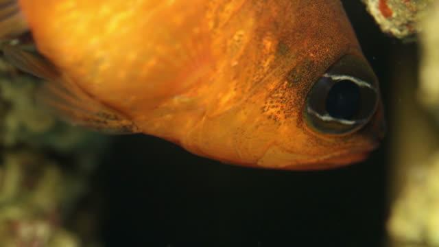 mullet marine fish - mullet fish stock videos & royalty-free footage