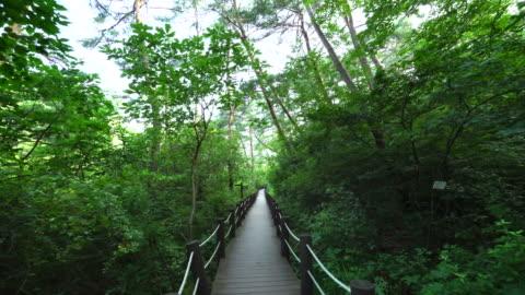mulmuri wetland reserve scenery of yeongwol, gangwon province, south korea - pedestrian walkway stock videos & royalty-free footage