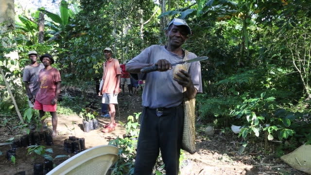 a multi clip of a farmer who is cutting and preparing a coconut with a machete on a plantation near pilate haiti other plantation workers that are... - afro caribbean ethnicity stock videos and b-roll footage
