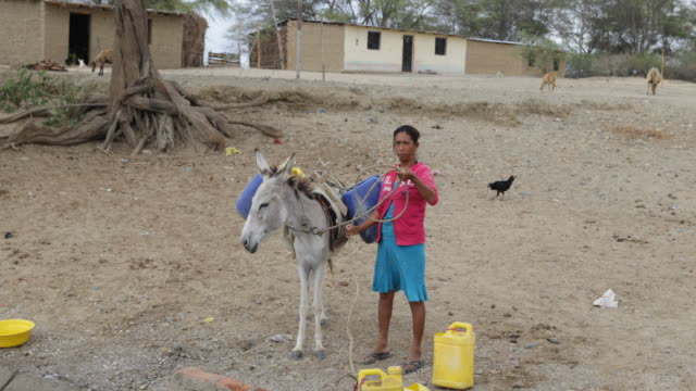 Multi clip of a woman collecting water and transporting it on a donkey