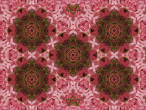 cu cgi multi colored blooming floral kaleidoscope pattern  - floral pattern stock videos & royalty-free footage