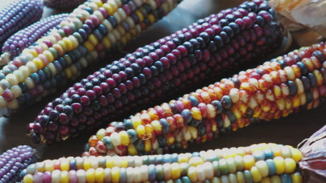 multi colored indian corn - variation stock videos & royalty-free footage