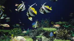 Multi colored tropical fish swimming in aquarium pool