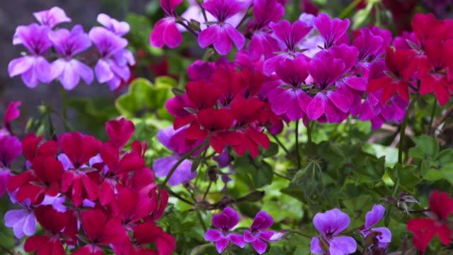 Multi coloured flowers in garden.