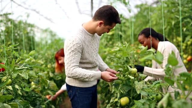 Multi-ethnische Gruppe der Gärtner im Gewächshaus
