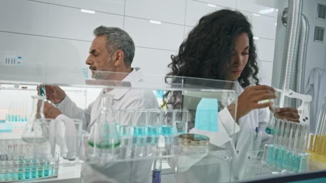 multi ethnic scientists team in laboratory. water flea daphnia on computer screen - crustacean stock videos & royalty-free footage