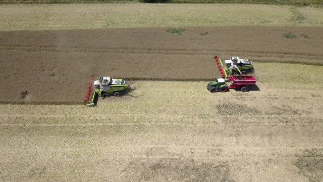 vidéos et rushes de multiclip and aerial view of harvesting a rape field in midsummer in germany. due to the drought, the harvest seems to be bad for german farmers this... - crucifers