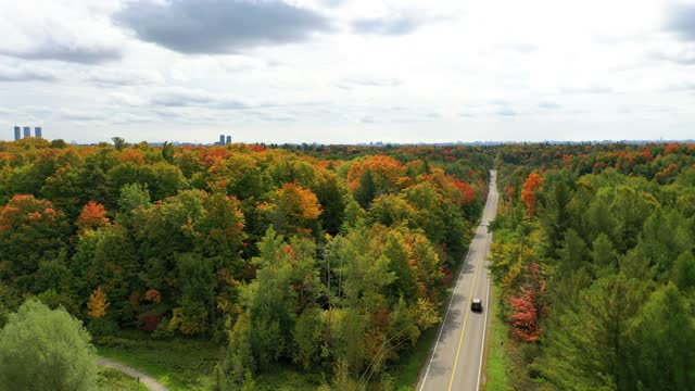 multicolor leaves on  both sides of pine village dr and vellore village community at woodbridge in vaughan, ontario, canada - footpath stock videos & royalty-free footage