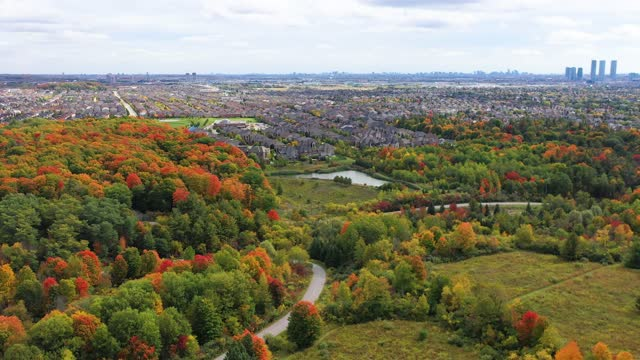 multicolor leaves on  both sides of pine village dr and vellore village community at woodbridge in vaughan, ontario, canada - ontario canada stock videos & royalty-free footage
