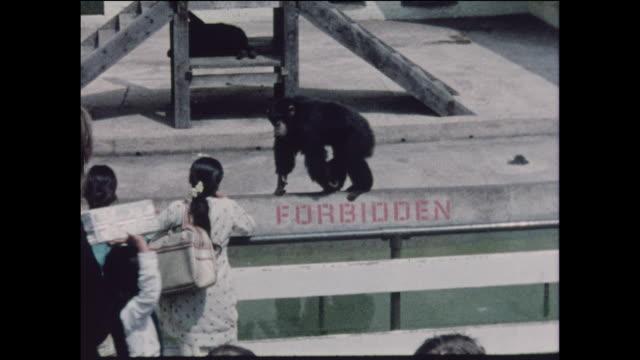 multicultural children on a school field trip to the zoo in the united kingdom circa 1968 no sound - 動物園点の映像素材/bロール