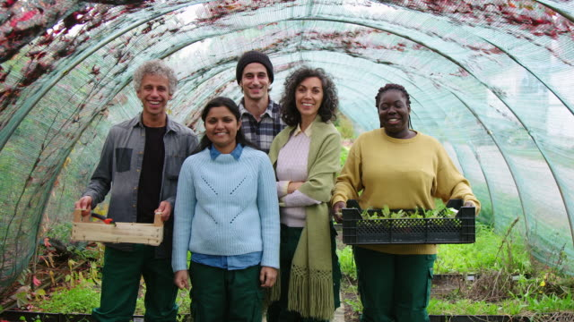 multi-ethnic group of gardeners in greenhouse - five people stock videos & royalty-free footage