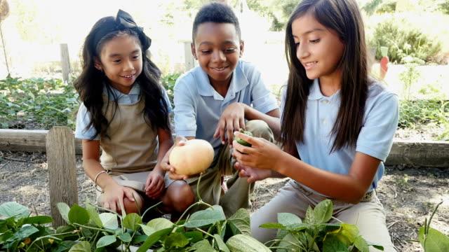 多民族のプライベートな大学生の野菜を調べるには、地元の農場の遠足 - アブラナ科点の映像素材/bロール