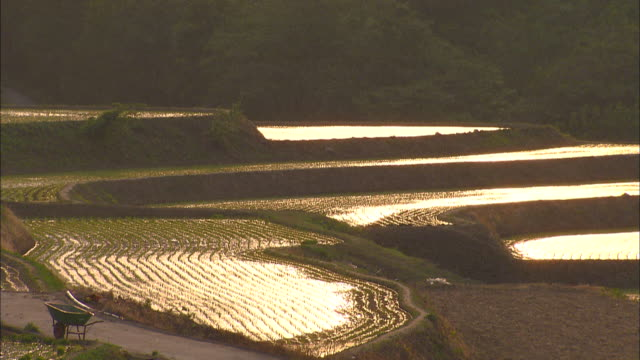 Multiple shots of sun setting at terraced rice paddy land in Pyeongchang