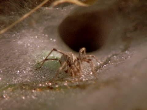 vidéos et rushes de multiple - toile d'araignée