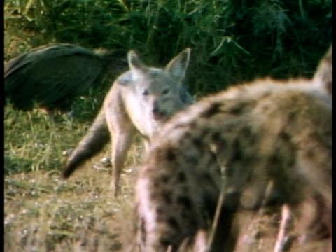 multiple - 死んでいる動物点の映像素材/bロール