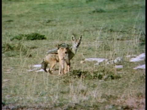 vídeos y material grabado en eventos de stock de multiple - oreja animal