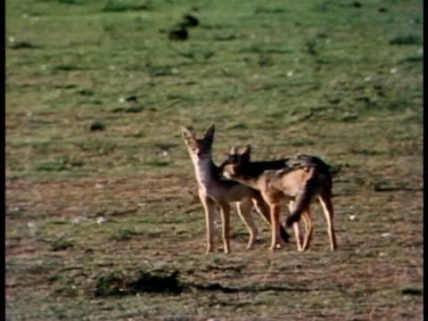 multiple - animal ear stock videos & royalty-free footage