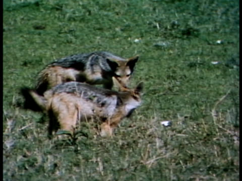 multiple - medium group of animals点の映像素材/bロール