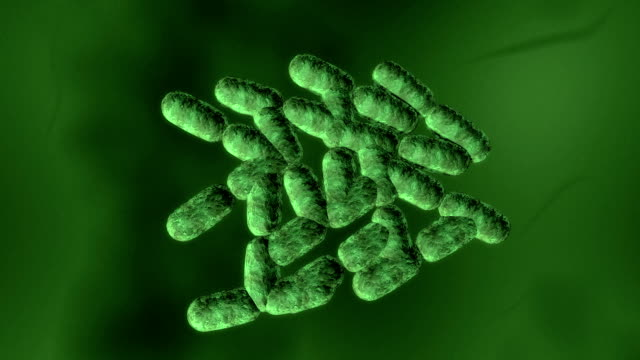 multiplying bacteria - bacillus subtilis stock videos & royalty-free footage