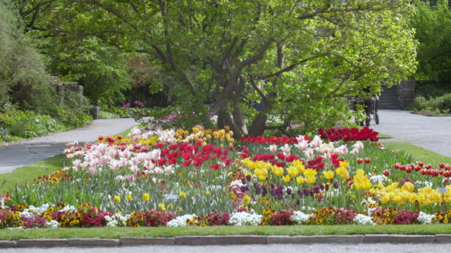 munich botanical garden wide shot of tulips and spring flower bed - botanical garden stock videos & royalty-free footage