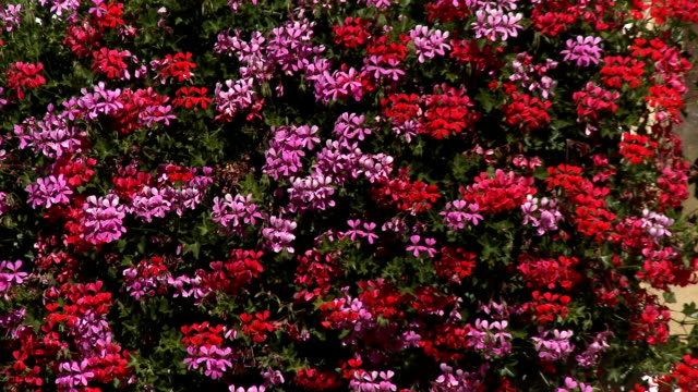 mural surrounding flower boxes in full bloom - window box stock videos & royalty-free footage