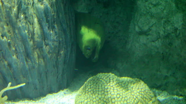 vidéos et rushes de murena dans le trou 1-hd 30p - murène