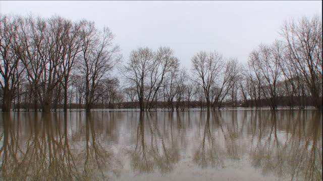 a murky lake reflects leafless trees. - 湖点の映像素材/bロール