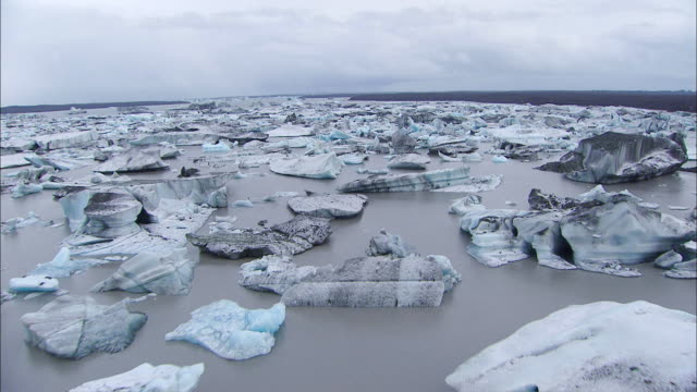 AERIAL Murky still waters surrounding broken icebergs close to the tree line of the Alaskan wilderness / Icy Bay, Alaska, United States