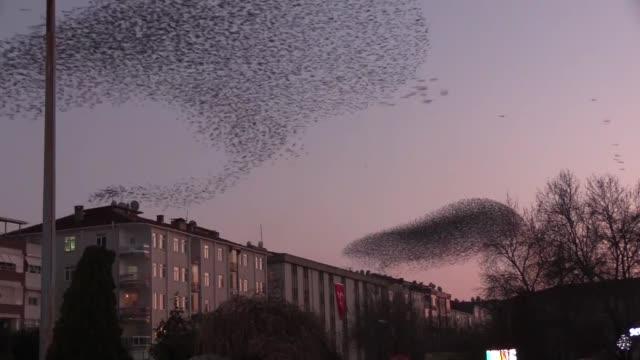 vidéos et rushes de a murmuration of starlings flies during the sunset over the northwestern turkish province of kirklareli on february 09 2019 - etourneaux