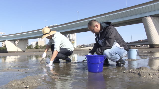 stockvideo's en b-roll-footage met muromi river in fukuoka city offers different types of clams in spring time during the season clusters of people are digging clams at the mouth of... - handen in een kommetje