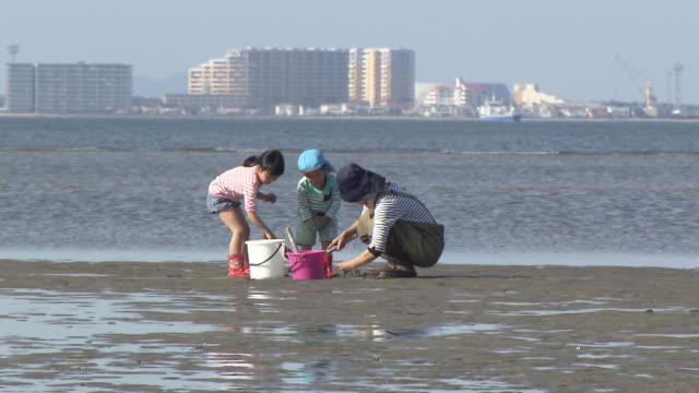 vídeos de stock, filmes e b-roll de muromi river in fukuoka city offers different types of clams in spring time during the season clusters of people are digging clams at the mouth of... - vazante