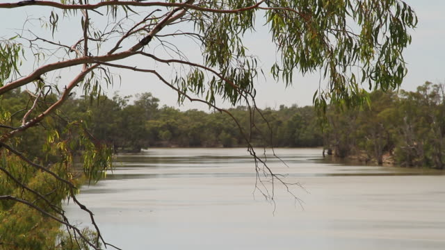 murray river, australia - victoria australia stock videos & royalty-free footage